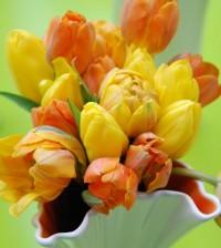 tulipaner forside